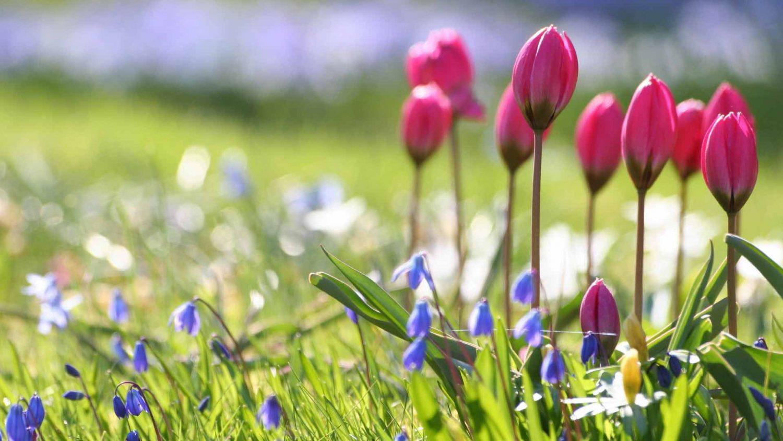 Картинки природ для рабочего стола весна