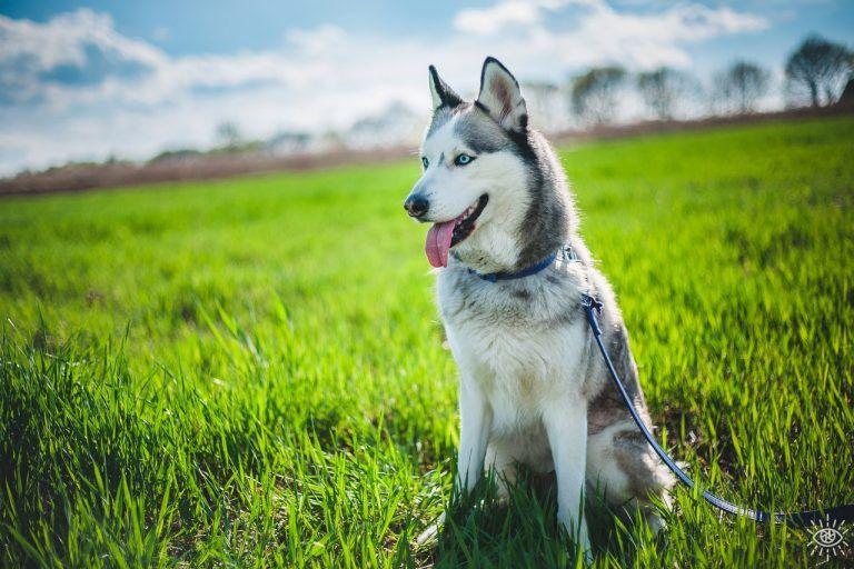 собака красивая