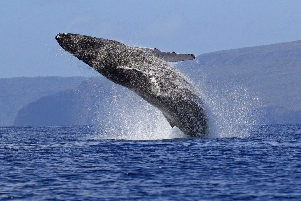 Какое самое большое животное в мире