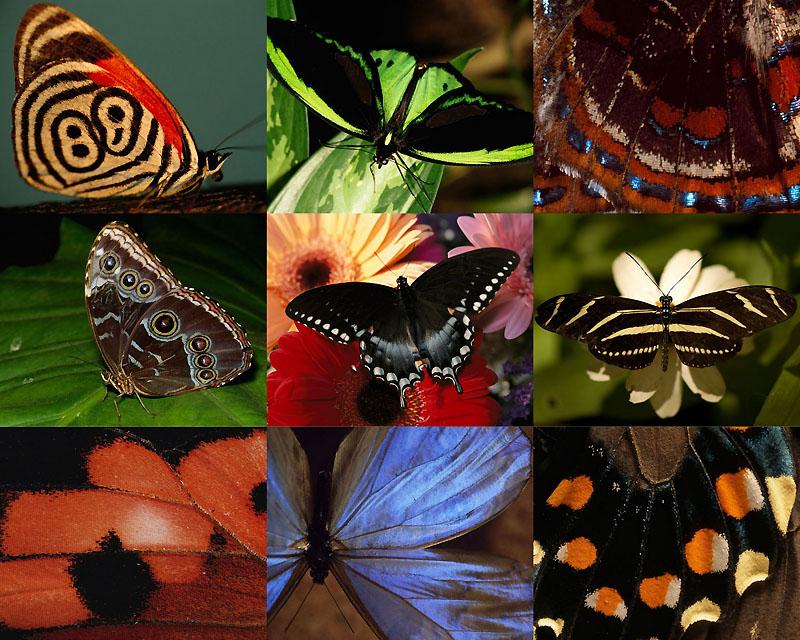 11 самых красивых бабочек на планете