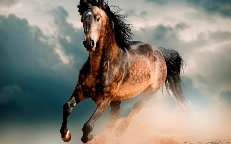 Самые необычные лошади в мире