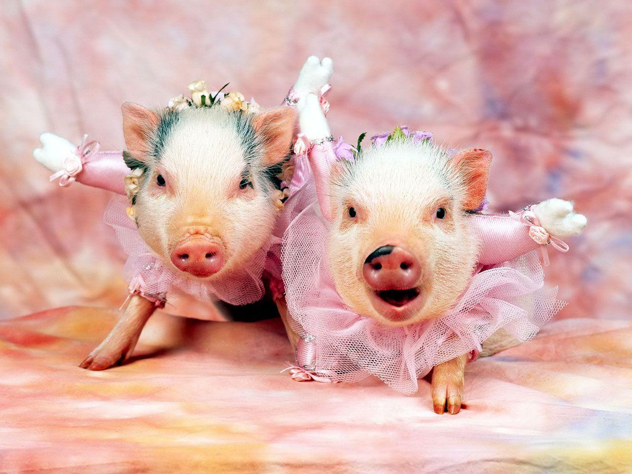 картинки с прикольными свиньями металлы вовсе