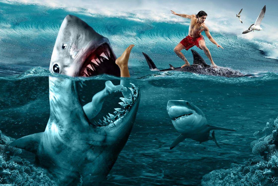 последние кино про акул картинки таунхаус имеет