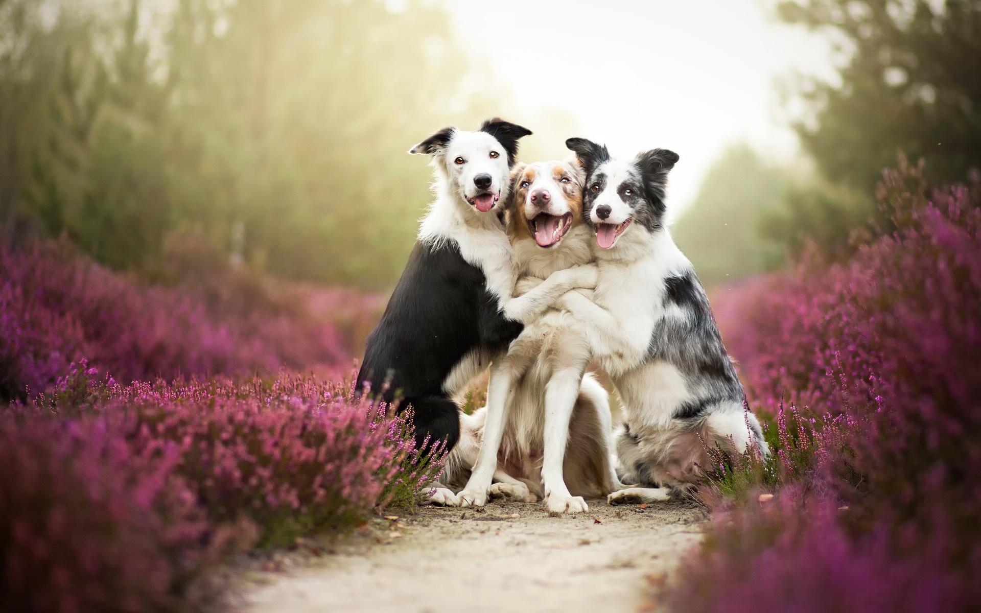 него зависит, самые лучшие картинки с собаками они очень понравятся